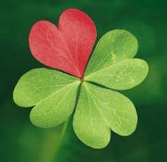 JoJo oo7JJ 7he four leaf clover Brahman